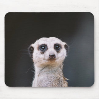 Are you looking at me?  Meerkat Mousepad