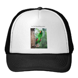Are you squawking at me? trucker hat