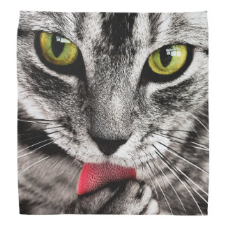 ARE YOU TALKING TO ME (tabby cat) ~ Bandana