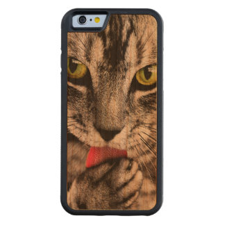 ARE YOU TALKING TO ME (tabby cat) ~ Carved Cherry iPhone 6 Bumper Case