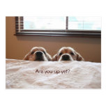 Are You Up Yet Golden Retriever Postcard