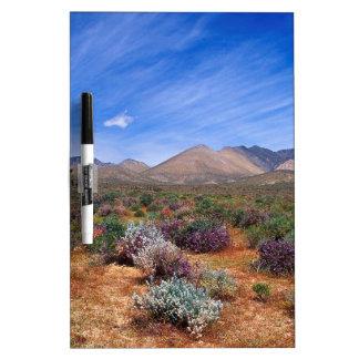 Área de la protección de la floración de los desie pizarra blanca