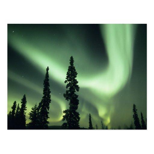 Área de los E.E.U.U., Fairbanks, Alaska central, Postales