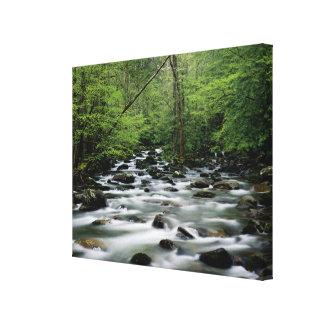 Área del área de Greenbrier, Great Smoky Mountains Impresión De Lienzo