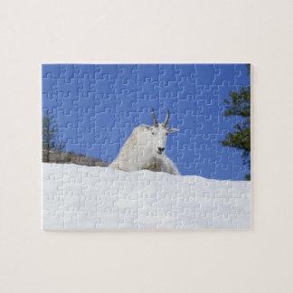Área del lago Ingalls cabra de Billy en nieve Rompecabeza