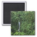 Área del volcán de Costa Rica, Arenal, puentes de  Imán Cuadrado