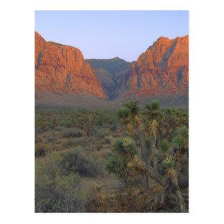 Área nacional de la protección del barranco rojo tarjeta postal