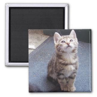 ARENA de los gatos 2 Imán Cuadrado
