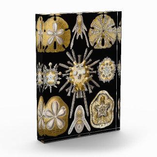 Arena-Dólares de Haeckel del vintage