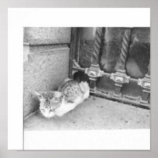 Argentina street cat poster