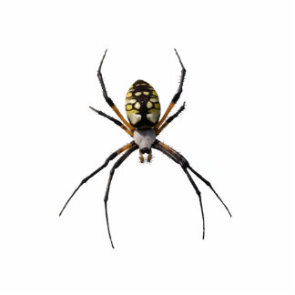 Argiope Spider Pin Cut Out