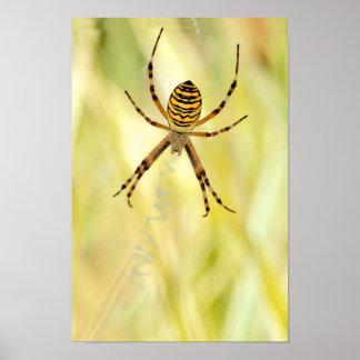 Argiope spider poster