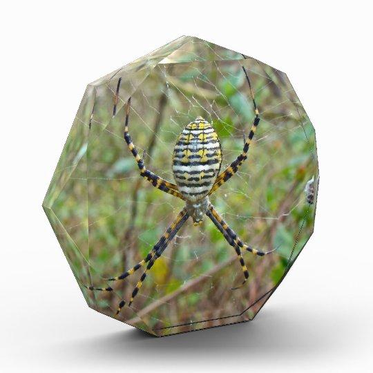 Argiope trifasciata Orb Weaver Spider Acrylic Award