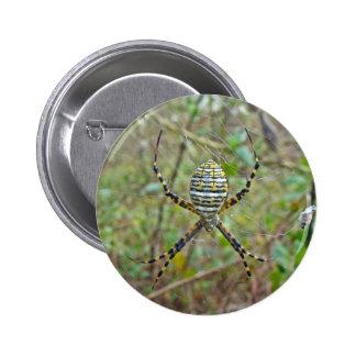 Argiope trifasciata Orb Weaver Spider Button