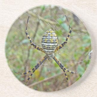 Argiope trifasciata Orb Weaver Spider Coaster