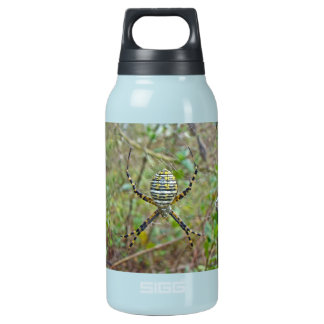 Argiope trifasciata Orb Weaver Spider Insulated Water Bottle