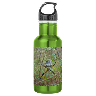 Argiope trifasciata Orb Weaver Spider Stainless Steel Water Bottle