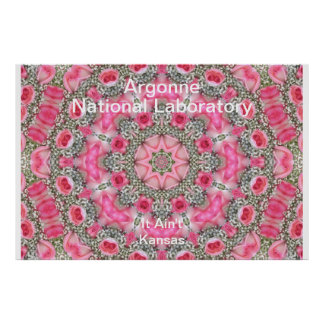 Argonne - Baby s Breath Pink Roses Star Field Print