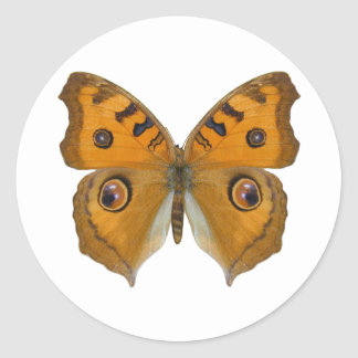 Argus Butterfly Round Stickers