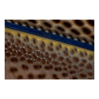 Argus Pheasant Feather Close Up Poster
