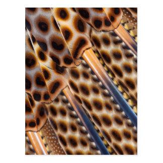Argus Pheasant Feather Design Postcard