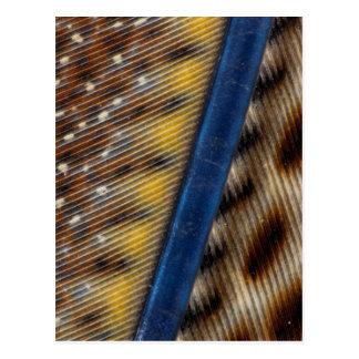 Argus Pheasant Feather Detail Postcard