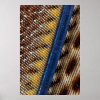 Argus Pheasant Feather Detail Poster