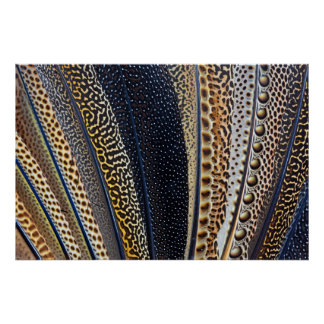 Argus Pheasant wing feathers 2 Poster
