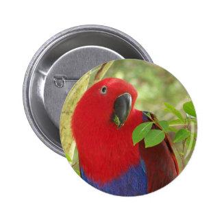 Aria Grand Eclectus Parrot Pinback Button
