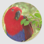 Aria Grand Eclectus Parrot Stickers