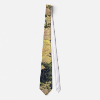 Arial view of trees of Germany Tie
