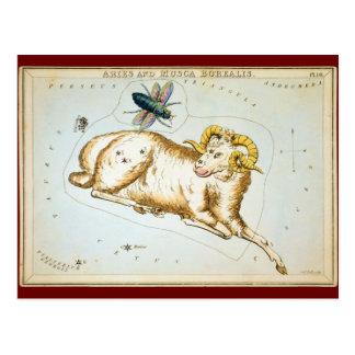 Aries and Musca Borealis Postcard