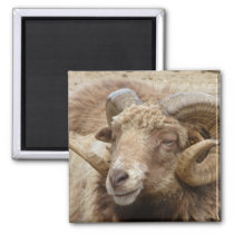 Aries Animal Nature Magnet