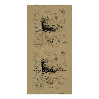 Aries Constellation Map Hevelius circa 1690 Card