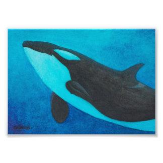 """""""Arise"""" Killer Whale / Orca photo print - 5x7"""""""