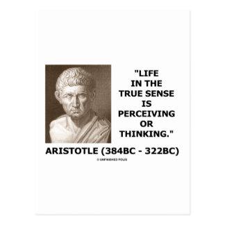 Aristotle Life True Sense Perceiving Or Thinking Post Card