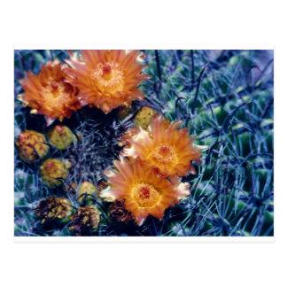 Arizona barrel cactus orange flower postcard
