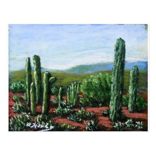 Arizona Cacti Post Cards
