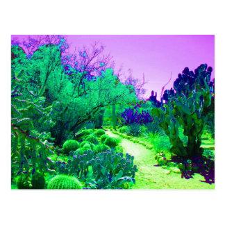 Arizona Cactus Path Postcard