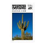 Arizona Cactus Postage Stamp 3997