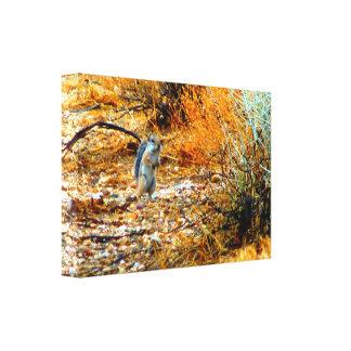 Arizona Chipmunk Gallery Wrapped Canvas