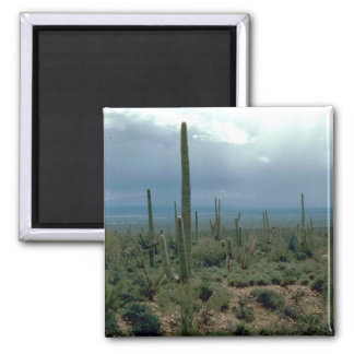 Arizona Desert and Cactuses Refrigerator Magnets