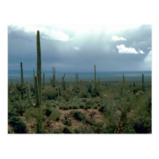 Arizona Desert and Cactuses Post Card