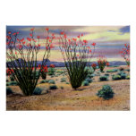 Arizona Desert Ocotillos in Bloom Posters