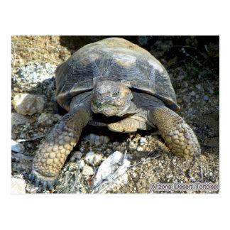 Arizona Desert Tortoise Postcard