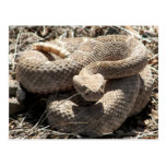 Arizona Diamondback Rattlesnake Post Cards