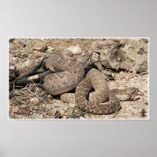 Arizona Diamondback y serpiente de cascabel de Moj Póster