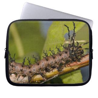 Arizona Horned Devil Caterpillar, Citheronia Laptop Computer Sleeve