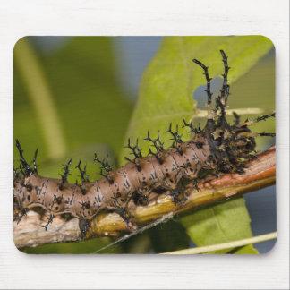 Arizona Horned Devil Caterpillar, Citheronia Mouse Pad