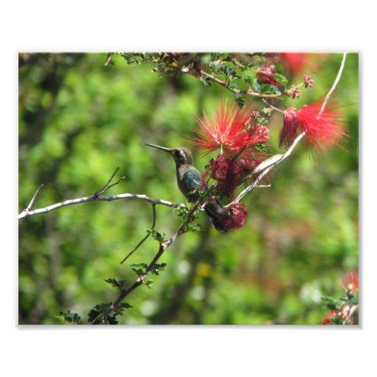 Arizona Hummingbird Photo Print